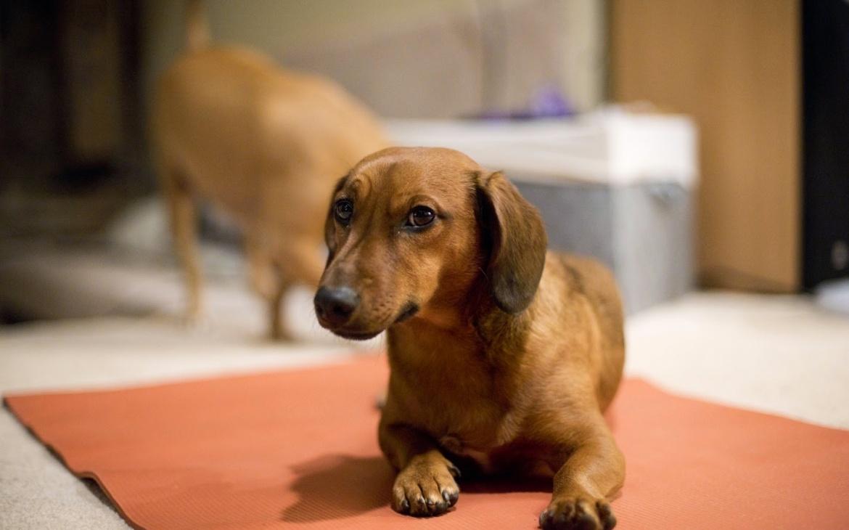 Los perros también se resfrían: ¿Cómo cuidarlos?