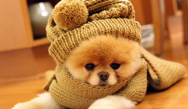 Los perros también se resfrían