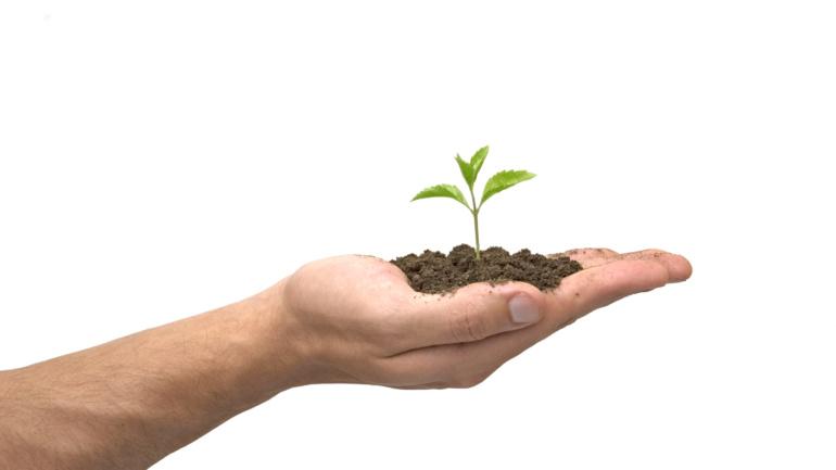 Campaña de donación de árboles