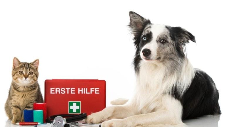 Cómo proceder con las mascotas en caso de emergencias