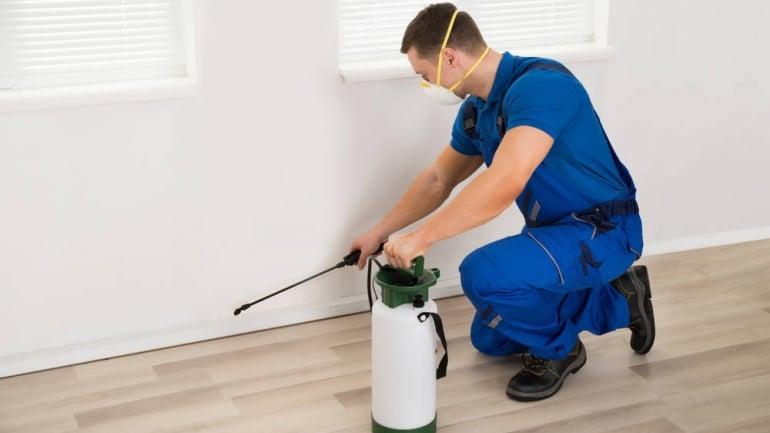 Control y prevención de plagas: Adiós insectos y roedores